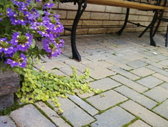 Spring Cleaning of Interlock Pavers