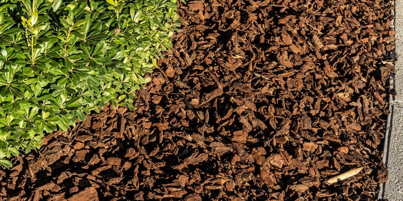 mulch in garden beside path